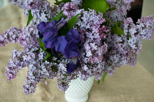 Lilacs and Iris